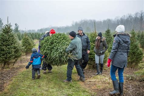 newsroom ontario celebrates second annual christmas tree day