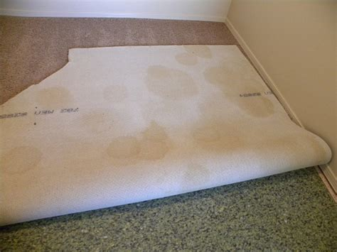 urine on carpet urine on carpet carpet vidalondon
