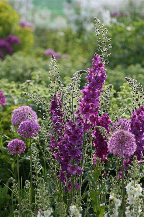 Purple Flowered Plants For The Garden 17 Best Ideas About Purple Garden On Purple Flowers Clematis Varieties And Purple