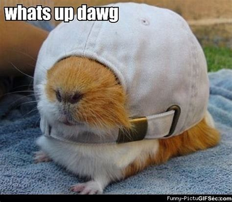 Whats Up Memes - whats up dawg viral viral videos