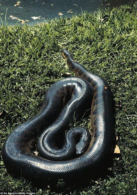 green anaconda images  pinterest green anaconda reptiles  anaconda snake