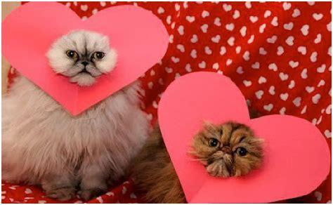 happy valentines day cat happy valentine s day 20 geeky valentines qcait