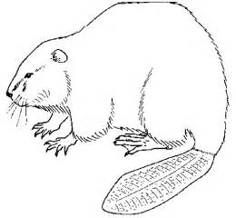 beaver color printable coloring pages of beavers cooloring