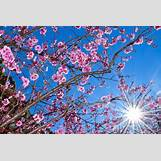 Spring Flower Backgrounds | 825 x 550 jpeg 146kB