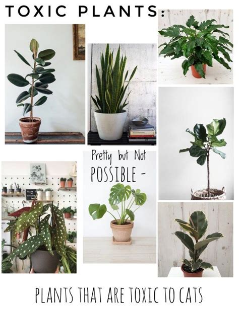 house plants safe for cats 17 best ideas about prettiest cat on pinterest pretty