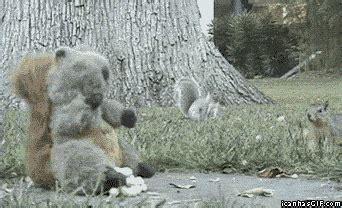 funny animal gifs  dr odd
