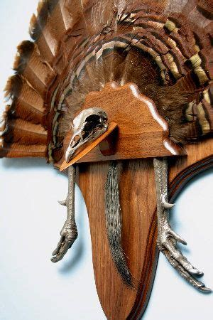 how to mount a turkey fan best 25 turkey mounts ideas on pinterest turkey hunting