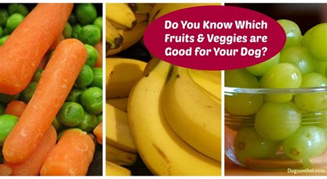 vegetables safe for dogs the best and worst fruit and veggie treats for your