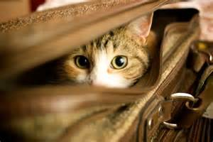 exclusively cats veterinary hospital blog four things you can do to de stress pet travel