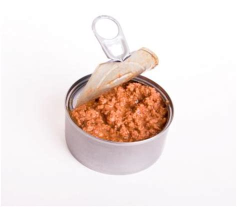 moist food what is the best diet for cats