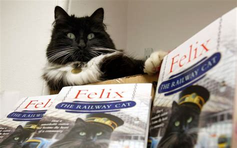 felix the railway cat books felix the huddersfield cat could well be greeting