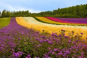 Flower Desktop Images - scaricare gli sfondi campo collina fiori papaveri