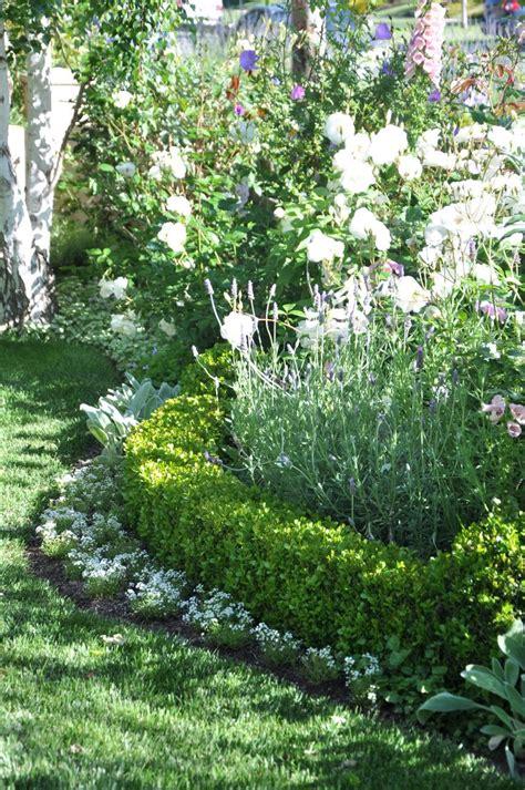 Garden Shrub Ideas 25 Best Ideas About Boxwood Hedge On Pinterest Hedges Boxwood Bush And Hedges Landscaping
