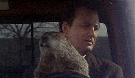 groundhog day gif need recommendations on which tv series to binge on