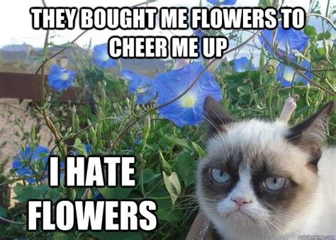 Cheer Up Cat Meme - i had fun once it was awful cheer up grumpy cat