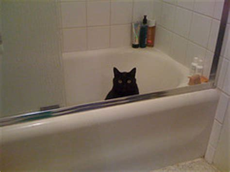 my cat keeps pooping in the bathtub cats with mental issues cat health behavior