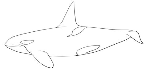 killer whale drawings coloring home