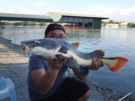 Joran Pancing Biasa mancing fish di malaysia sensasi luar biasa oleh