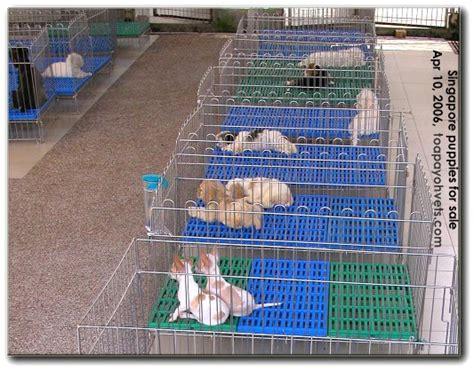 dog house singapore 031208asingapore veterinary dog cat rabbits hamster