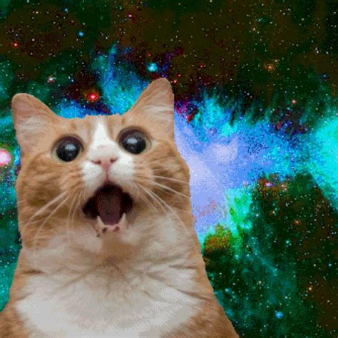 Cat In Space 17 best images about cats in space on cats