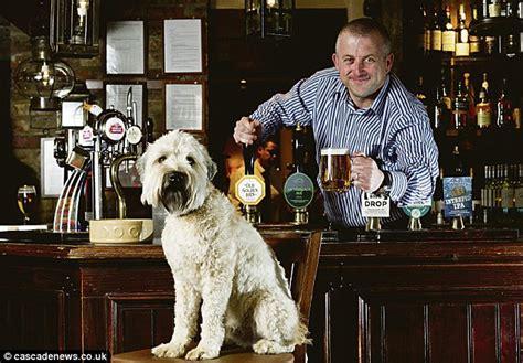 top dog bar nj tripadvisor for dogs finds canine friends bars shops and