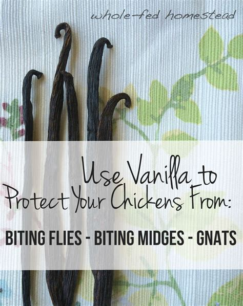 Lots Of Gnats In Backyard by Use Vanilla To Protect Your Chickens From Gnats Biting
