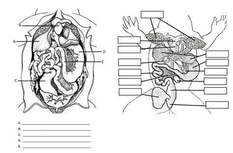 anatomy labeling worksheet frog anatomy labeling frogs unit frogs worksheets and anatomy