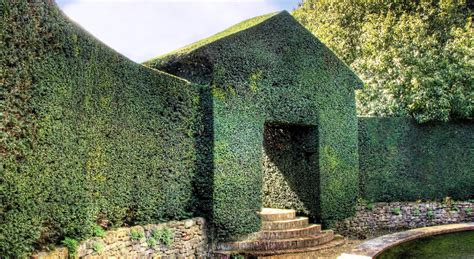 topiary wall 25 exles of amazing topiary and designs