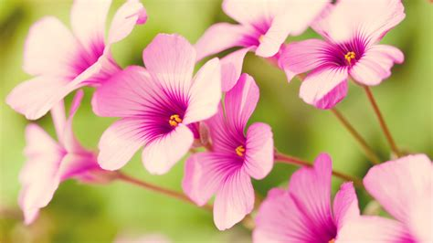 flower pic spring flower wallpaper 702489