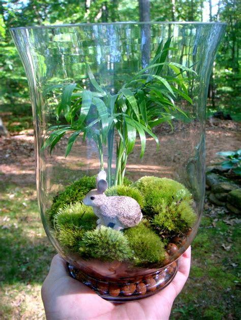 Vase Terrarium by Hydroculture Terrarium Hurricane Vase Rabbit Palm Moss