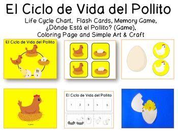 ciclo de vida del pollo para colorear e imprimir apexwallpaperscom chicken life cycle in spanish colorante diy y