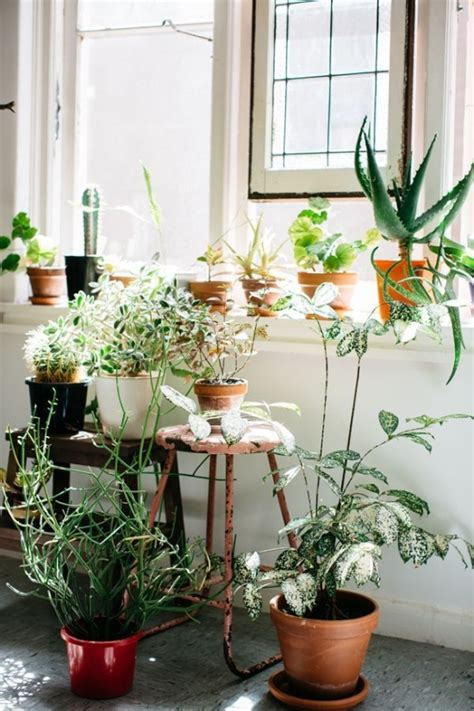 Indoor Plants For Interiors A Amazing Interiors With Beautiful Light