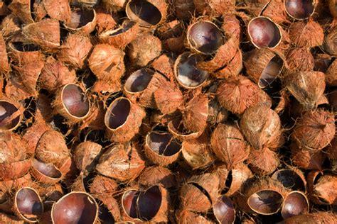 Jual Batok Kelapa Muda agar batok kelapa tak jadi sah oleh ardi winangun