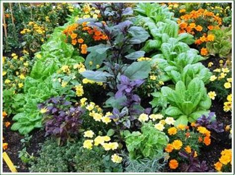 Deep Rooted Vegetables - companion planting the village gardener