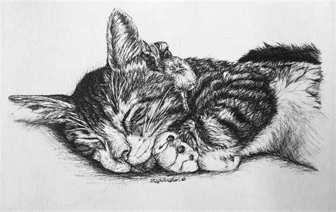 custom   ink cat drawings  inspurration