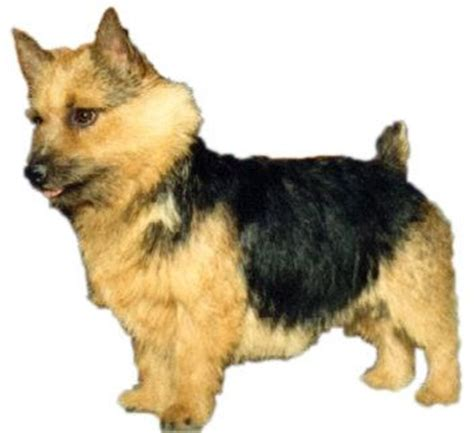 low energy small dogs 17 best images about dogs low shedding small dogs on small breed dogs