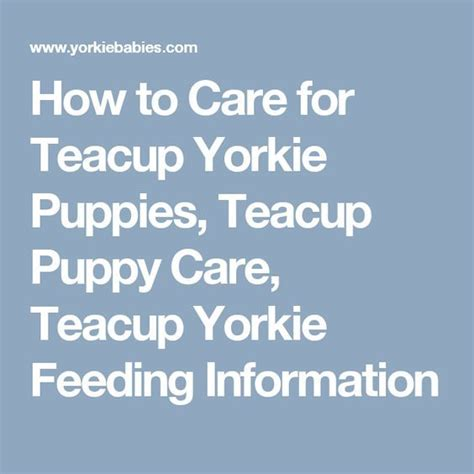how to care for yorkie puppy 17 best ideas about yorkie puppies on yorkie adorable puppies and dogs