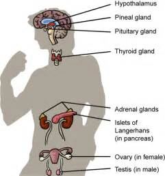 Related pictures endocrine disorders to you see represented in this