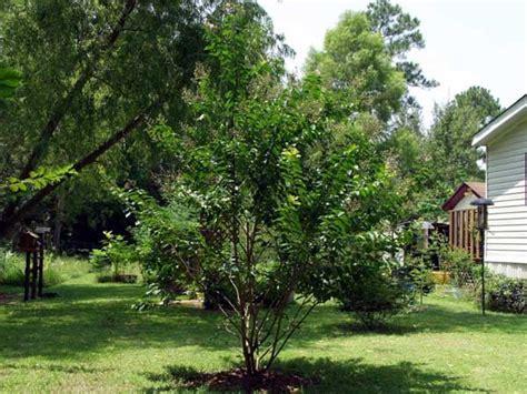 Tropical Garden Contest 2004 Toptropicals Com