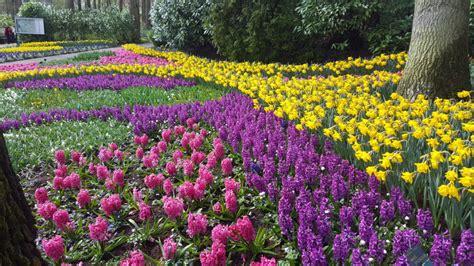 parco dei fiori amsterdam citt 224 dei fiori apre il parco keukenhof