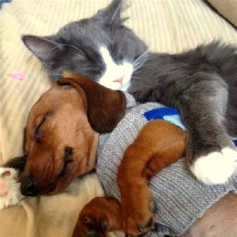 cuddling puppies 40 dogs and cats who just to cuddle