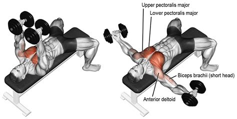 flat bench dumbell flye inner chest workout 3 exercises to build inner pecs for