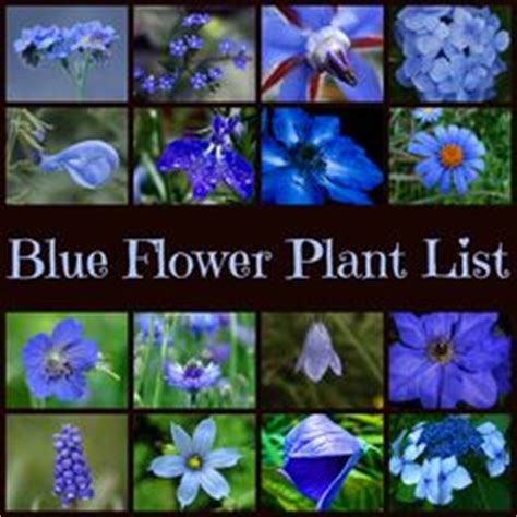 theme garden list blue white pot theme repetition of colour is a simple