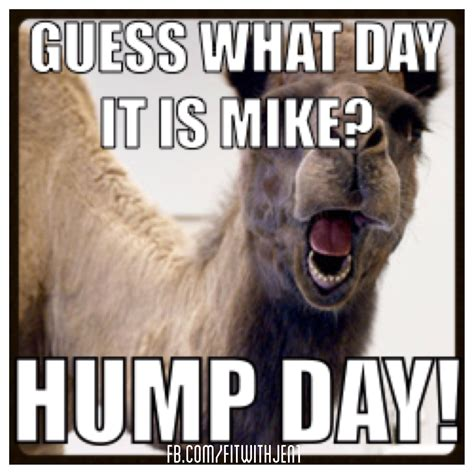 imagen fanny mikey camel hump day quotes quotesgram