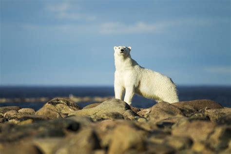 ver imagenes sorprendentes de animales diez viajes emocionantes para ver animales salvajes el