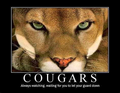 Kitchen Urban Dictionary - san diego really does have wild cougars