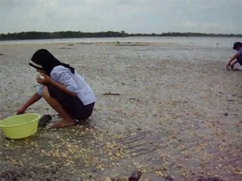 Kerang Remis mencari kerang di pantai remis kuala selangor