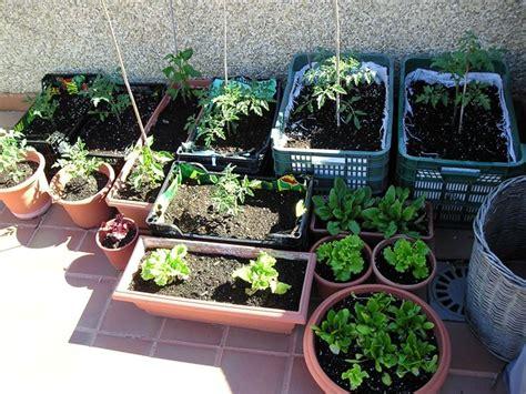 orto nel terrazzo orto nel balcone orto in balcone coltivare orto su balcone