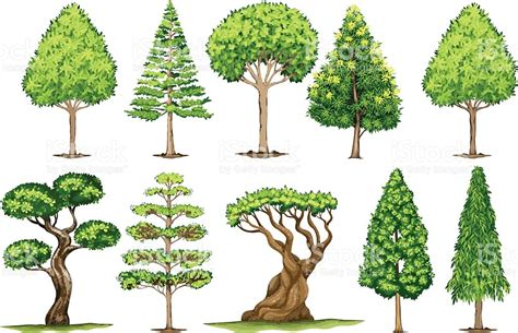 type of tree different types of trees stock vector 635949946 istock