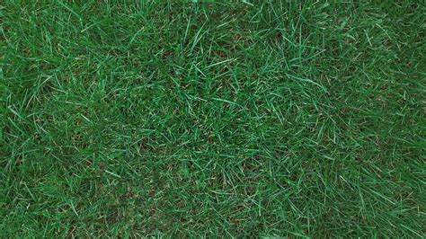 Blue Turf by Fast Facts About Kentucky Bluegrass Turf